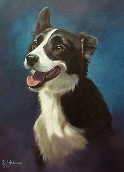 Tess-Border Collie